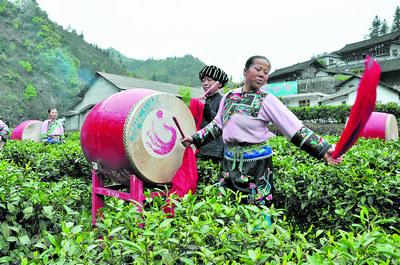 Сбор чая у народности мяо всегда сопровождают ритуалы