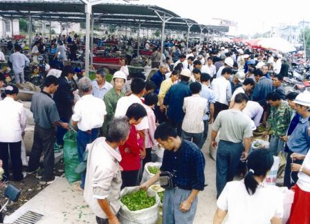 В Сунъяне чайный рынок с каждым днём становится цивилизованнее, и подобную картину дикой чаеторговли там можно увидеть всё реже