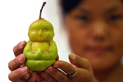 Китайский фермер вывел груши в форме Будды