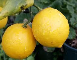 Лимонный чай со льдом и фенхелем