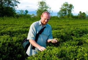 Чайная экспедиция в Абхазию
