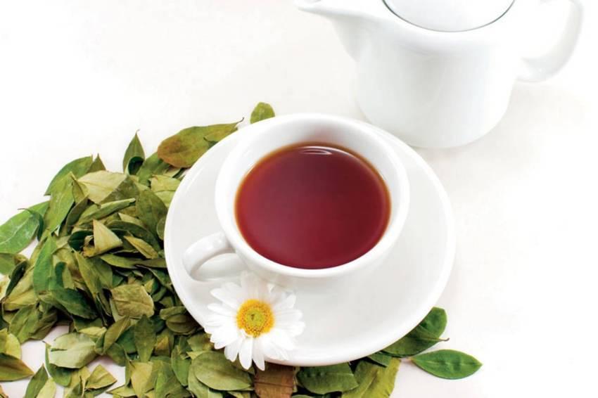 Почему каждому человеку на Земле так полезно пить чай?