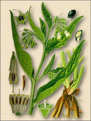 Травяной чай опасен?
