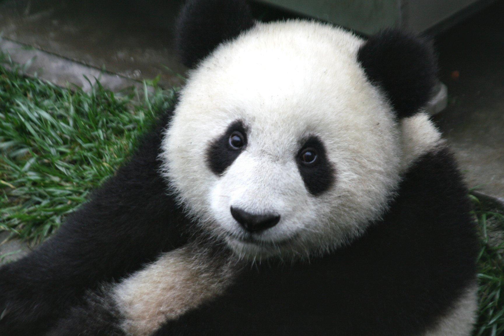 Зоолог из Китая Янши Потти хочет побить рекорд по созданию самого дорогого чая в мире