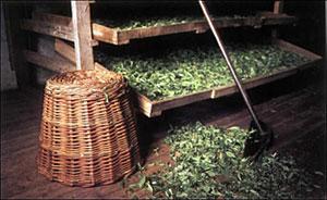 Использование чая в непищевых целях