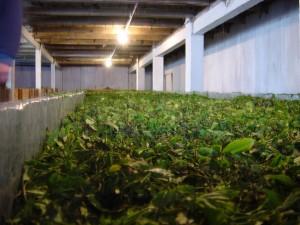 Производство собственной чайной продукции
