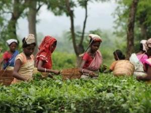 Чай — национальный индийский напиток!
