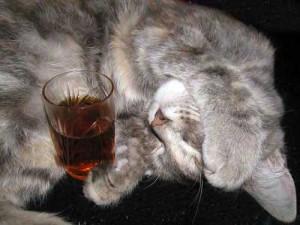 Чай для животных. Существует?