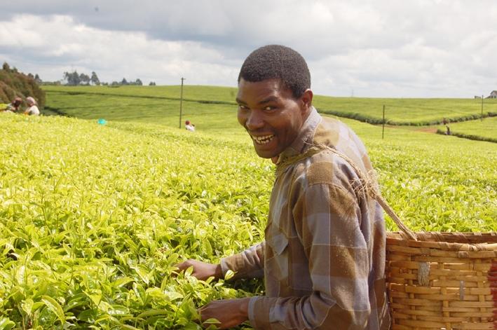 Из-за неурожая в Кении растут мировые цены на чай