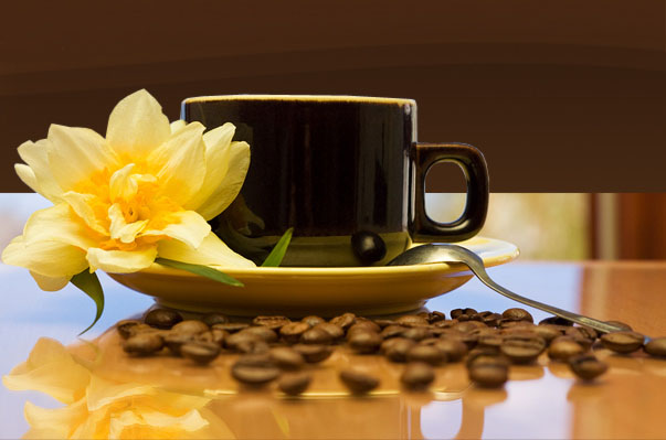 V Международный Фестиваль чайной и кофейной продукции