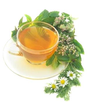Зеленый чай признан первым продуктом способствующим долголетию