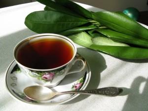Польза «кофейного чая»