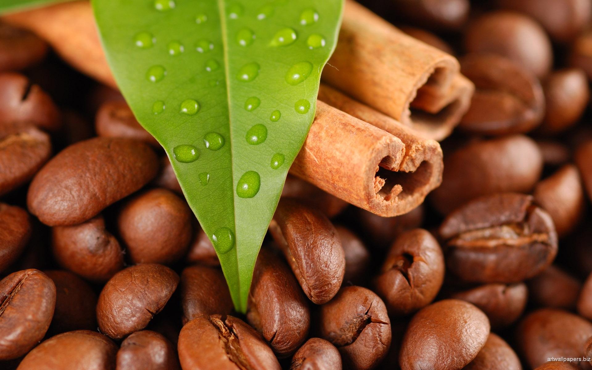 Зерна – в кофе, листья – в чай