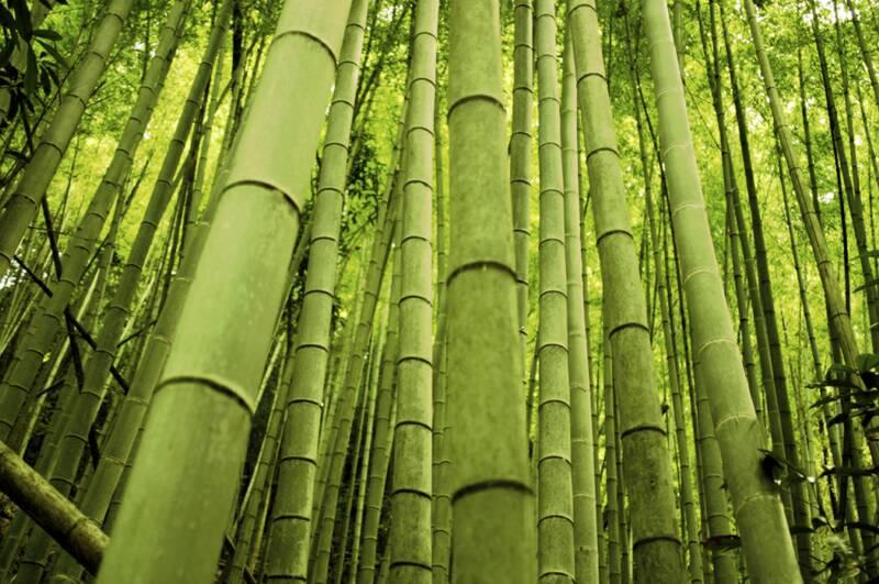 Польза бамбукового чая
