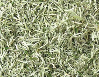 В Центральном Китае начался сбор белого чая