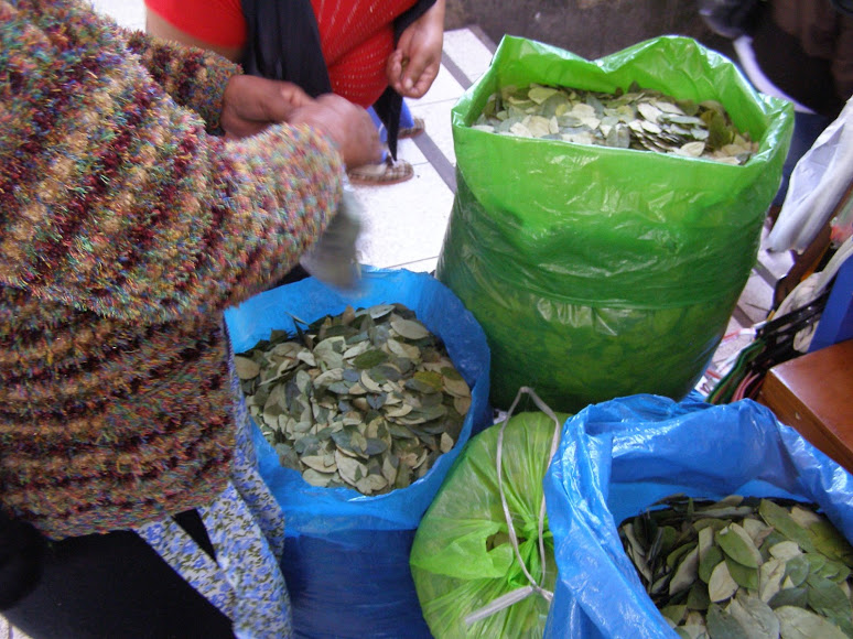 Чай из коки — не наркотик, но под запретом