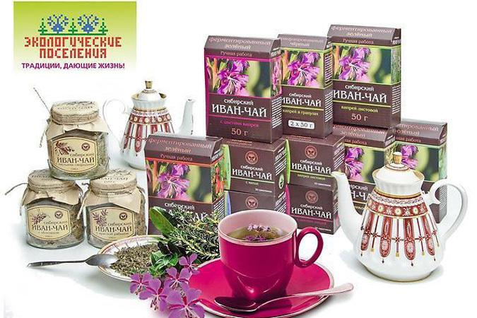 Сибирский иван-чай: возрождение легенды