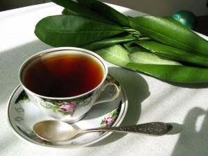 Кофейный чай — самый полезный для человека напиток: к такому выводу пришли учёные