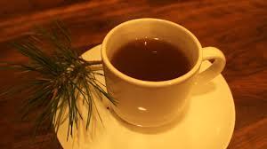 О пользе соснового чая