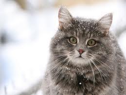 Все для кошек и не только для них