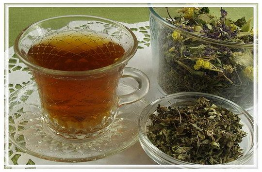 Копорский чай – кладезь здоровья