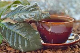 Самый полезный горячий напиток на свете — кофейный чай