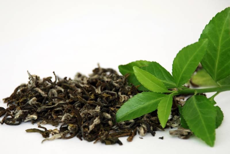 Зеленый чай повышает умственные способности мужчин