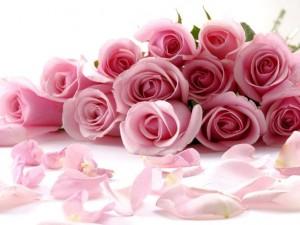 Цветы — залог хорошего настроения