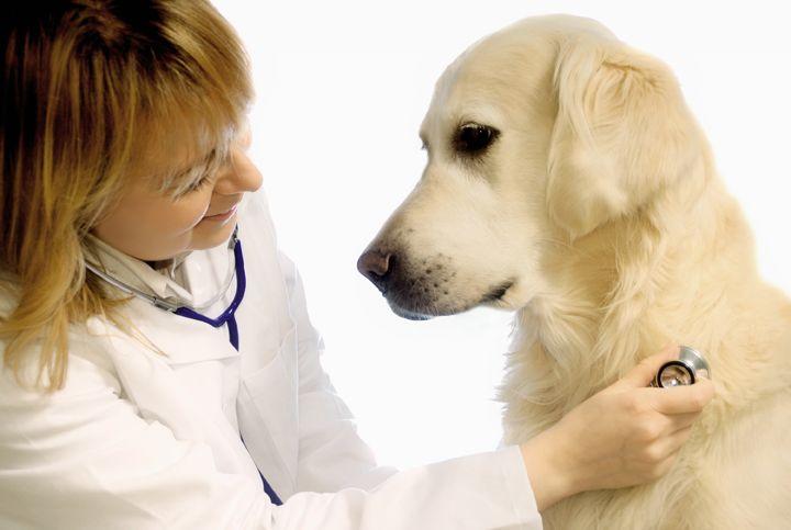 Качественные ветеринарные услуги для всех владельцев животных.