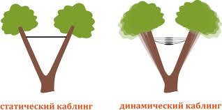Качественные услуги, связанные с деревьями