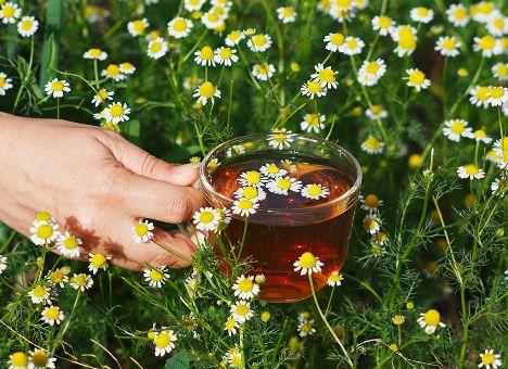 Чай укрепляет сердце курильщика