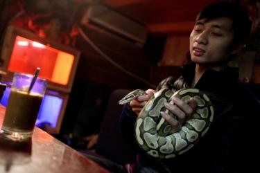 Кафе со змеями откроется во Вьетнаме