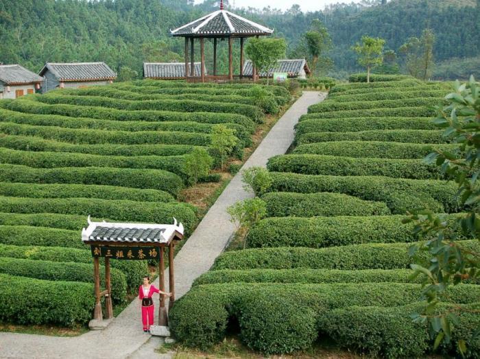 Засуха в Азии повлияет на цены на чай