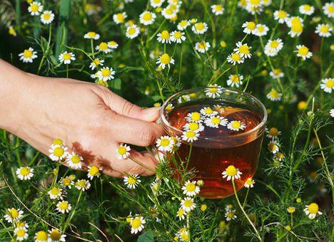 Все сорта чая полезные по своему