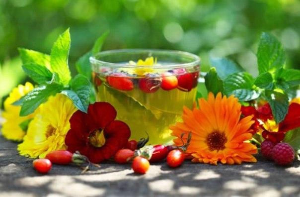 О пользе витаминных чаев