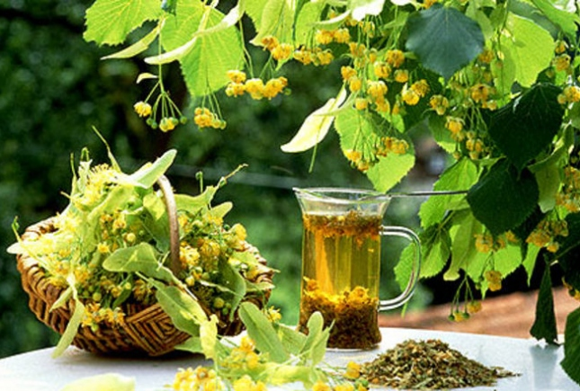 Липовый чай поможет омолодиться