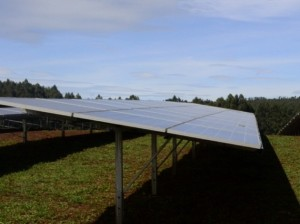 Чайную плантацию компании Williamson Tea оборудовали солнечной электростанцией
