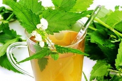 Чай из крапивы: удивительная сокровищница здоровья
