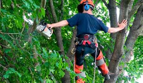 Crazy Alp — удаление деревьев профессионалами по самым доступным ценам