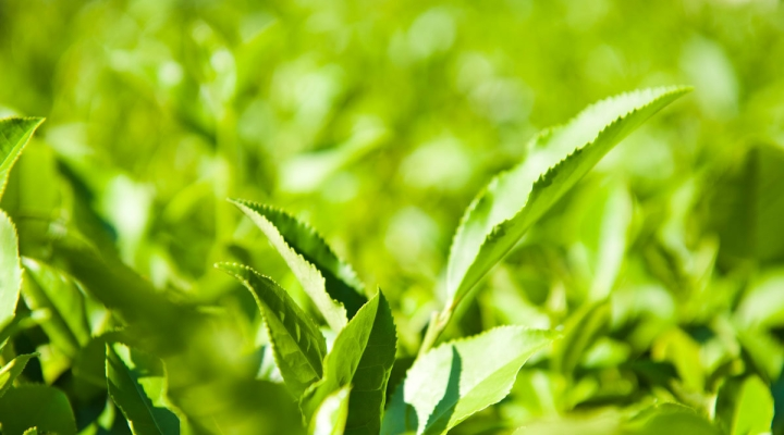 Прикамье и его чайные традиции