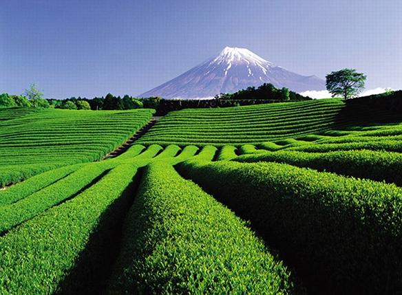 Частое потребление чая может стать причиной артрита