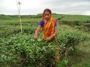 Индийские поставщики чая в Россию обратились с предложением осуществлять расчёты с российскими оптовыми покупателями в рупиях