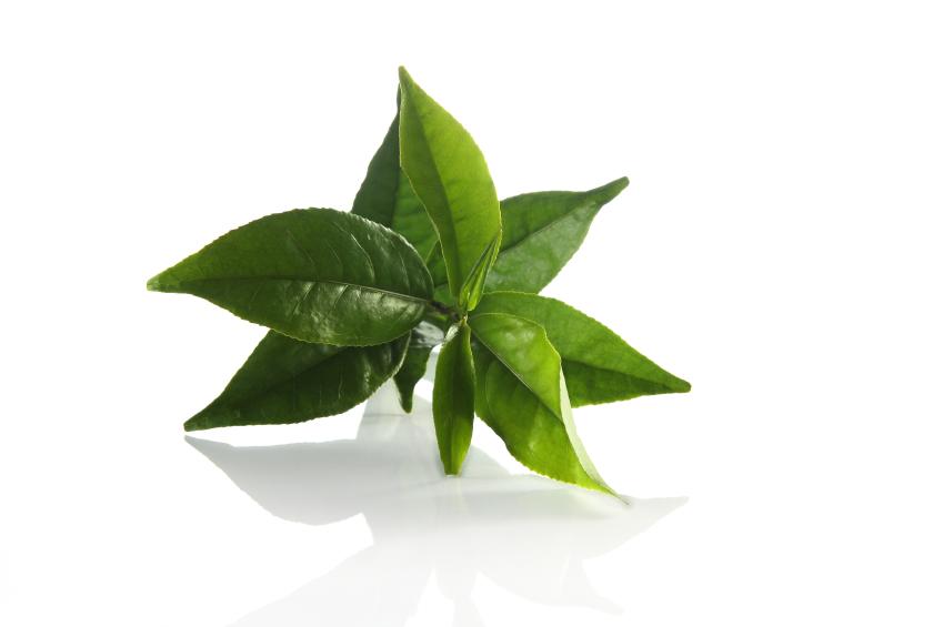 Ученые создали чай для повышения аппетита