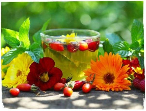 Готовим тонизирующие травяные чаи