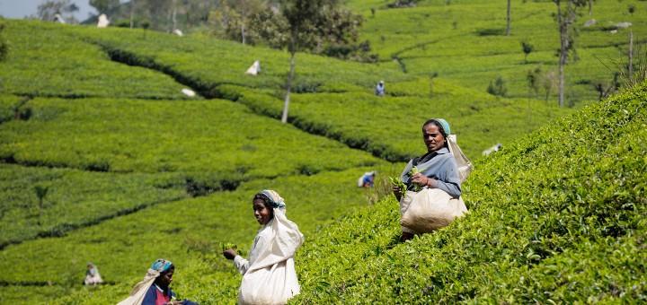 Удивительный Мир Чая