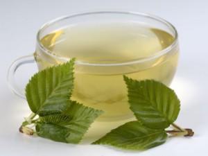 Развеяны мифы о пользе крупнолистового чая