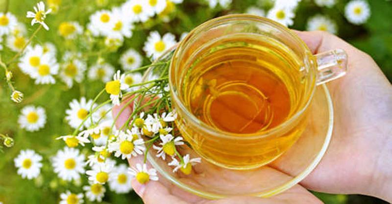 Ромашковый чай продлит жизнь и вернет красоту