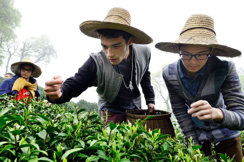 Основные причины завышенной цены на чай лунцзин