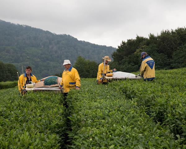 Мацестинский чай стал «Продуктом года» на выставке в Москве