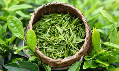 Зеленый чай и кофе защищают от инсульта